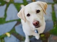 勸你千萬別一直盯著狗狗的眼睛看,否則...