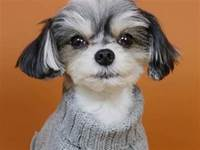 走過秀,看過時裝周:論精緻,你可能還比不上一條狗!
