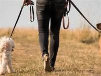遛狗時狗子非要咬住繩子,主人:它這是想遛我……